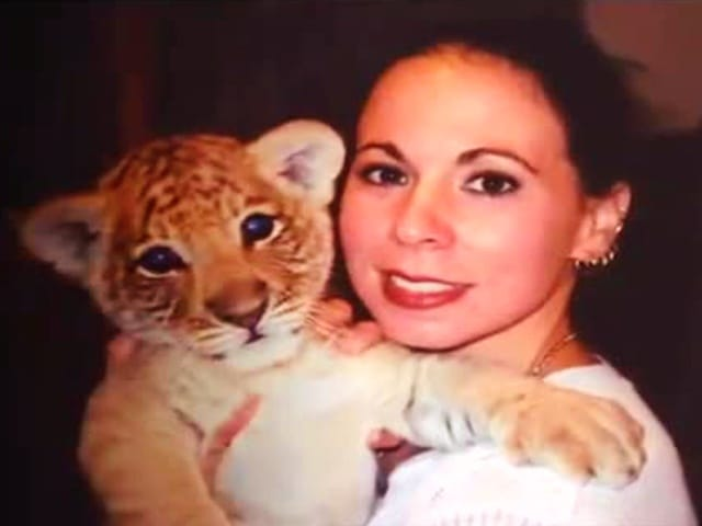 Liger cub with Rajani Ferrante who is a famous liger cub trainer.