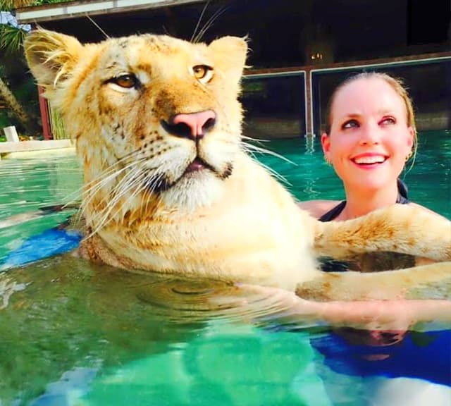 Liger cubs love swimming
