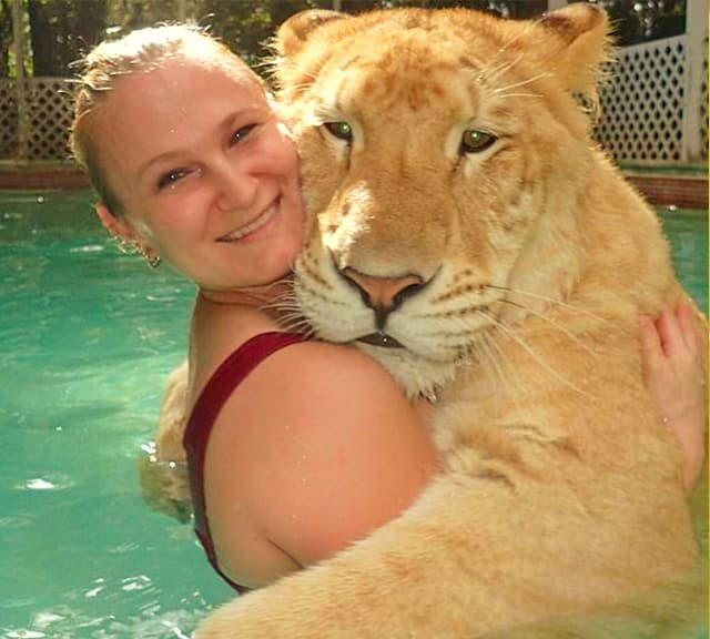 China York Swimming with a liger cub