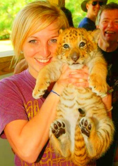 A liger cub at Myrtle Beach Safar, South Carolina, USA.