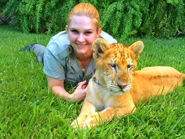 Zero mortality rate of the liger cubs at Myrtle Beach Safari, South Carolina, USA.