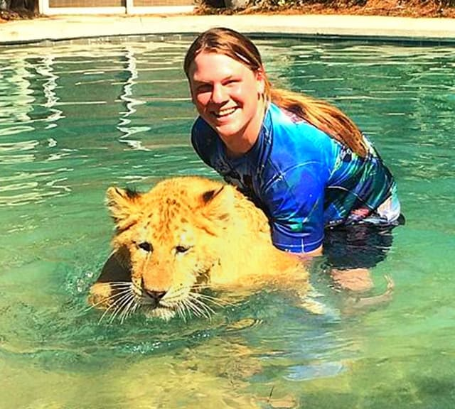 Liger Cub Swimming At Myrtle Beach Safari South Carolina Usa